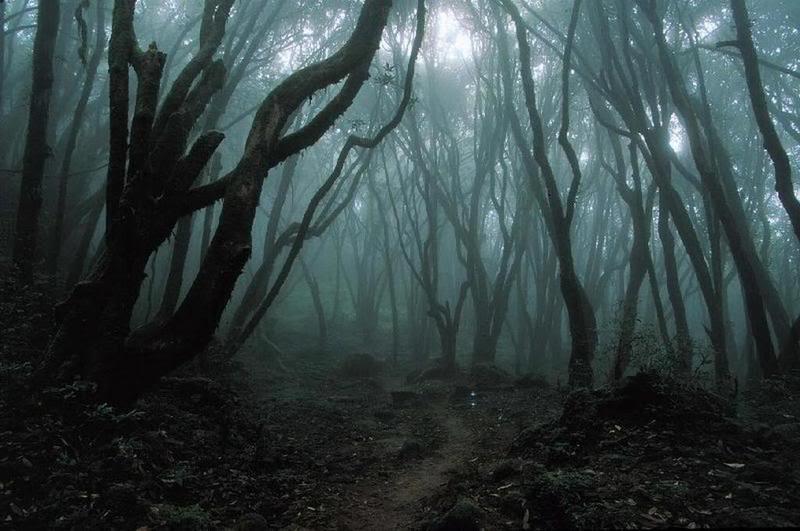 Aventura: Darkness, post mortem Floresta-assombrada