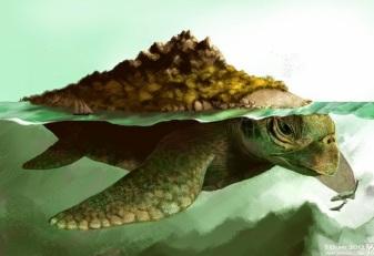 Tartaruga Dragão